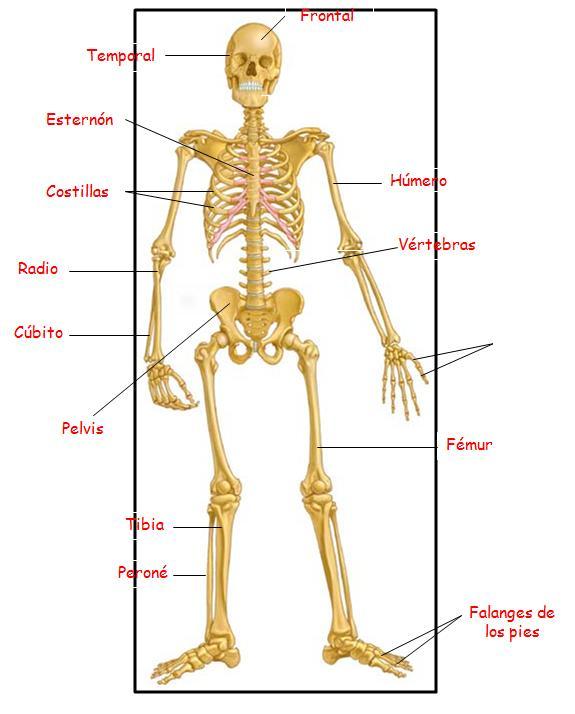 informatica apilacada el cuerpo humano y sus partes