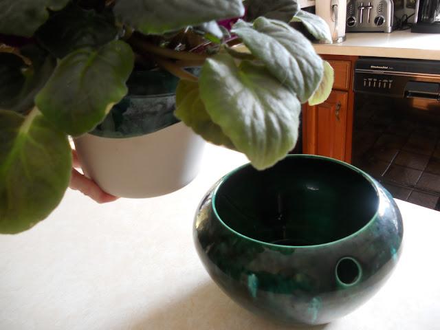 An African violet pot
