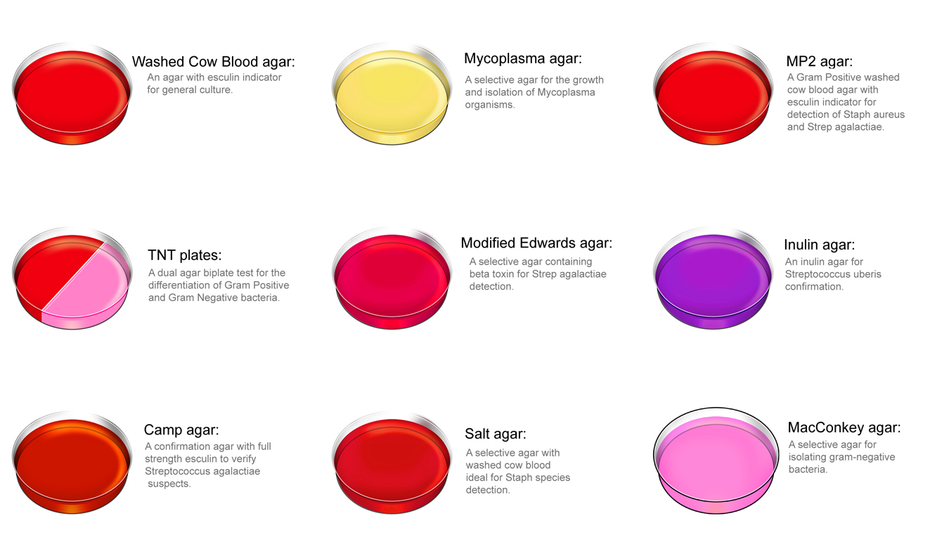 Microbiology New Discoveries Culture Media And Its Types Used Un Microbiology Lab