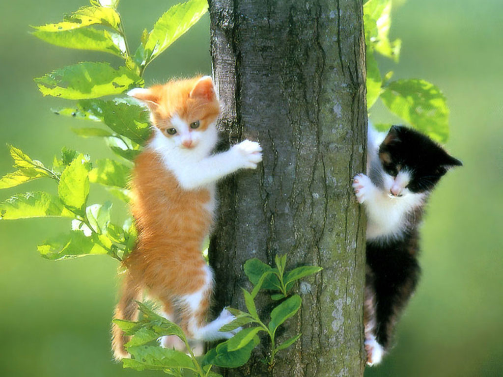 So cute cat images and photos high resolution images of cats kitten wallpapers white cats images animals wallpapers pets wallpapers funny cats playful cats pictures altavistaventures Choice Image
