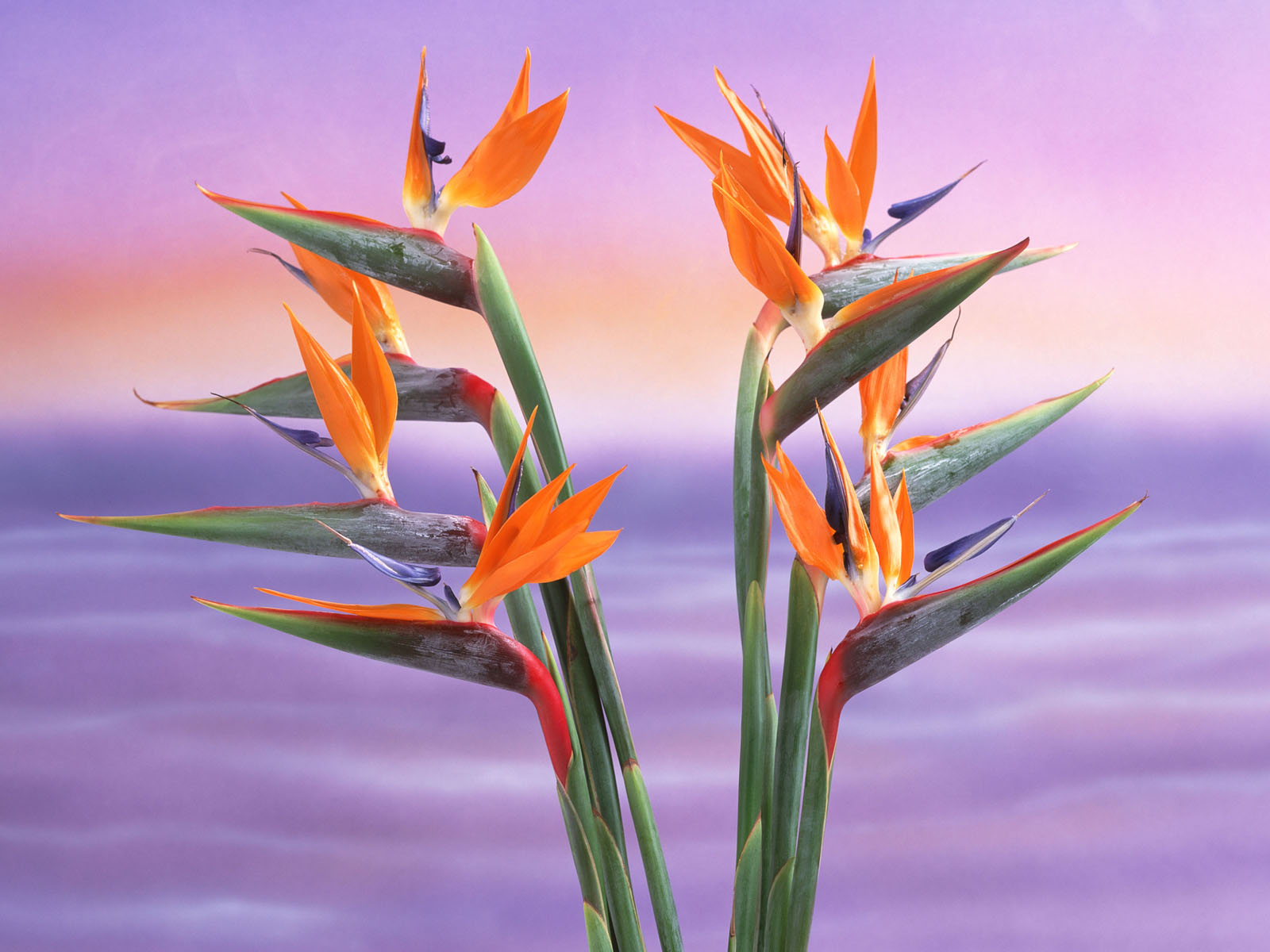 Rare Exotic Flowers Species HQ Photos And Wallpapers