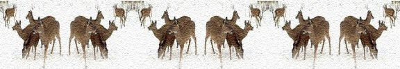 white tail deer photo banner image