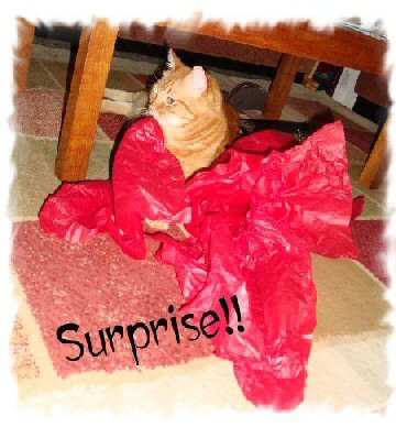 _surprise cat photo