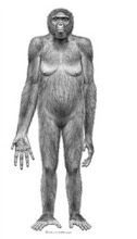 Reconstruction of Ardi our oldest hominid at 4.4 Billion