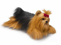 yorkshire terrier plush stuffed animal toy classic