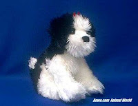 shih tzu plush stuffed animal toy Zenny