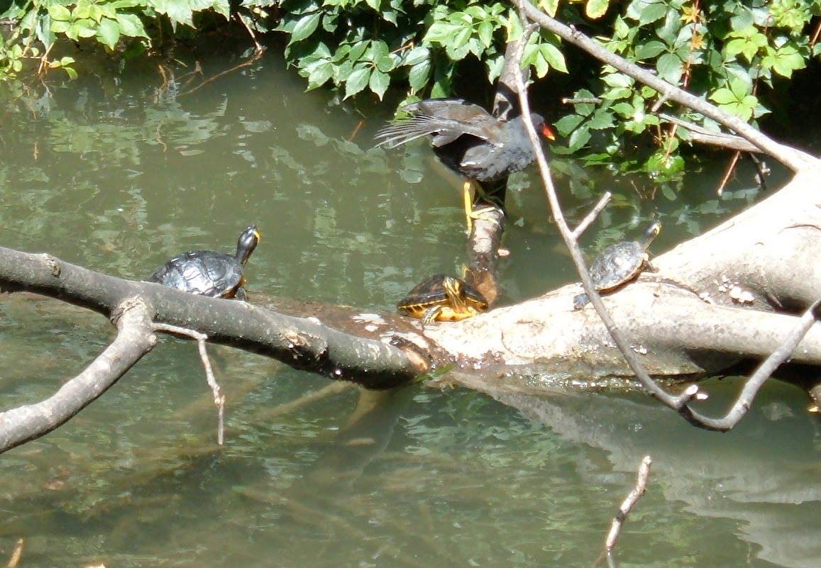 Il difficile inverno delle tartarughe pagina 2 forum for Vaschette tartarughe