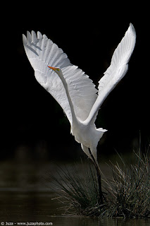 becca s book blog disparate obligations in a white heron   a white heron remains relevant today because people chose between the environment and money the environment and convenience or the environment and