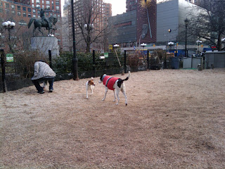 Union sq dog park