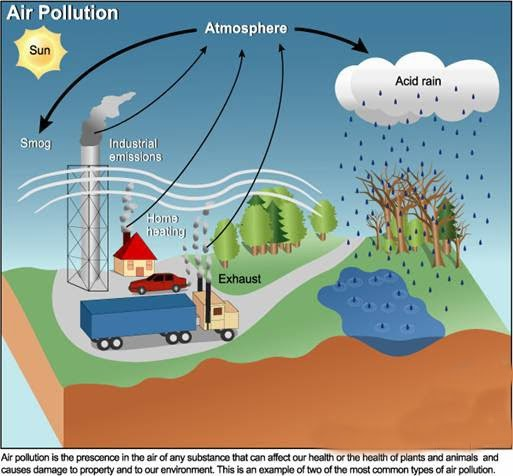 My World: Air Pollution Affects Plants, Animals, and ...Air Pollution Effects On Animals
