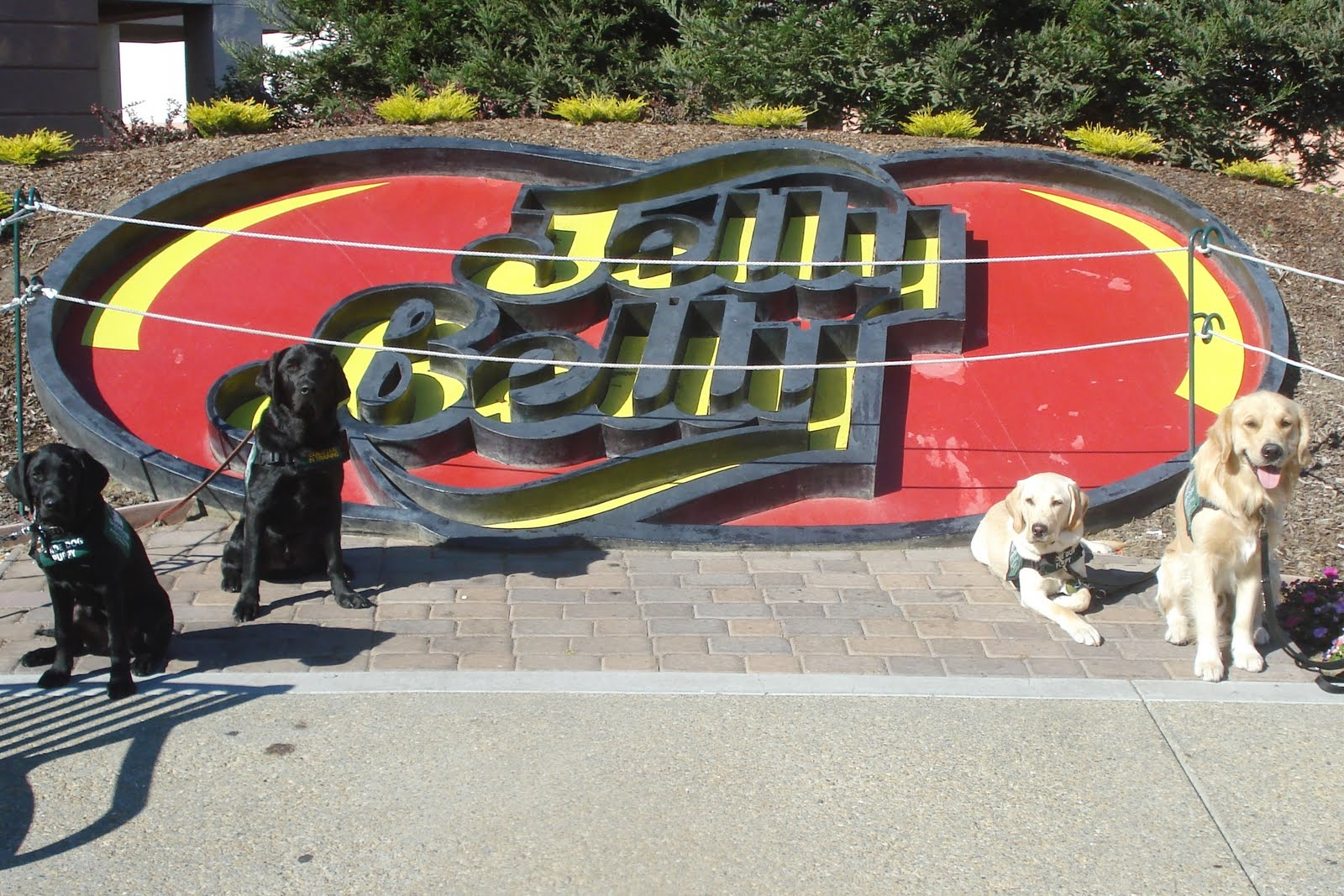 Orleans: The Adventures of a Guide Dog Puppy: Fun Day Trip