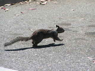 Squirrel running around in the parking lot in Los Angeles