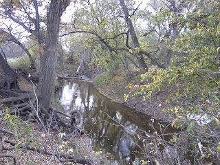 Creek meandering in the park