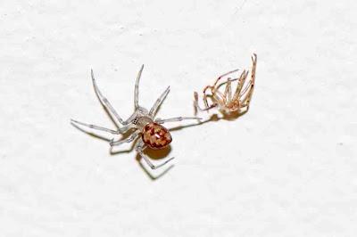 Urban Wildlife Guide Spider Business