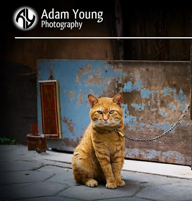 Adam Young Photography