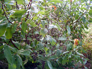 spider's web with morning dew