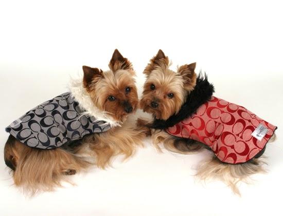 Miniature Yorkshire Terrier Winter Pet Care