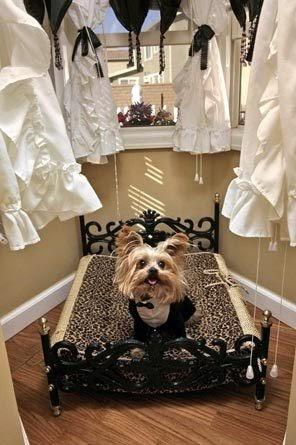 Miniature Yorkshire Terrier A Luxury Dog House With A