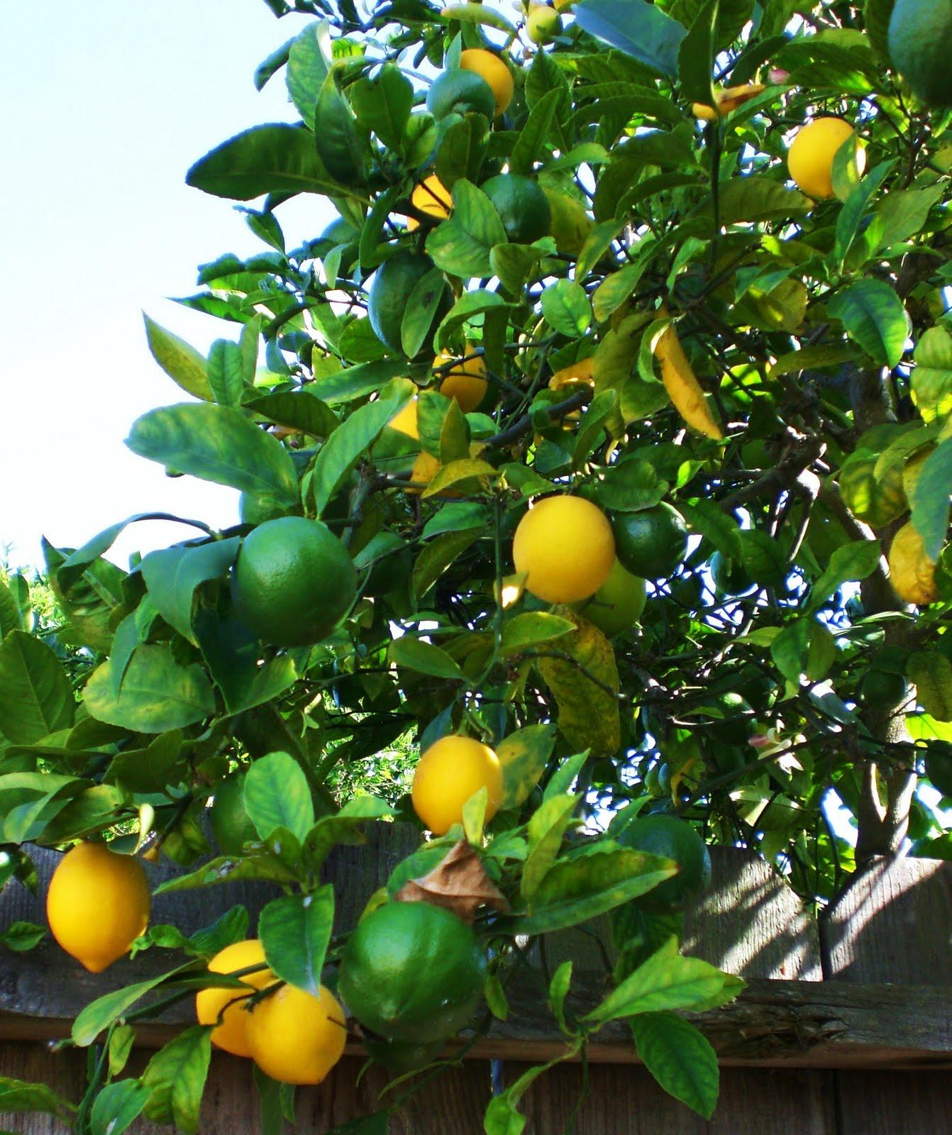Moonrose Meanderings by Elizabeth Munroz: Lemon Escargot