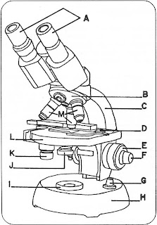 Microscopio Manual on 2001 Jaguar S Type Serpentine Belt Diagram