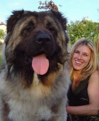 Giant Dogs
