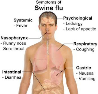 Understanding and Dangers And Causes Of Swine Flu