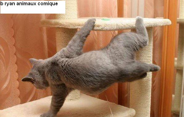 animaux comique: Karate_cat
