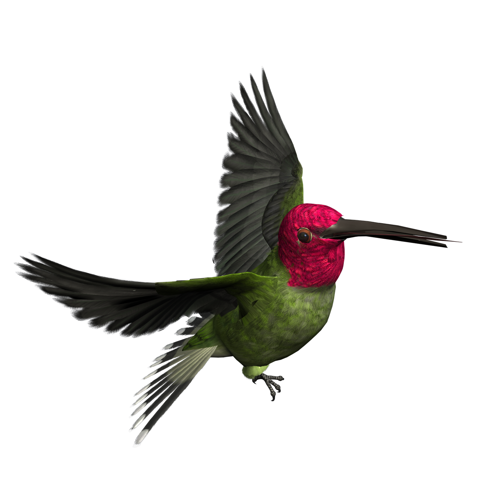 bird clipart graphics clip resolution birds graphic hummingbird cliparts transparent flying woodpecker foot per resting arts designs beats minute while