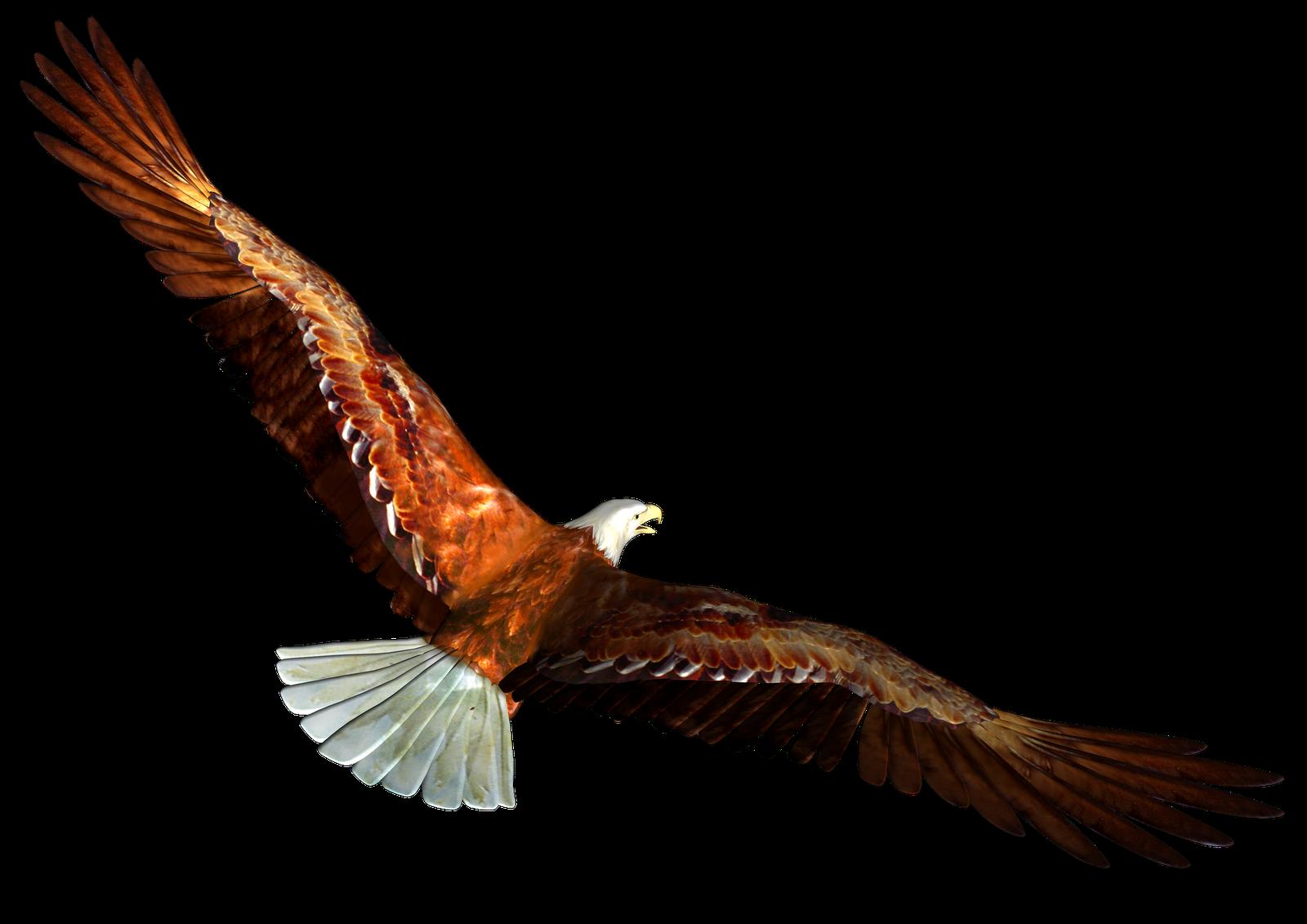 free bald eagle clipart - photo #37