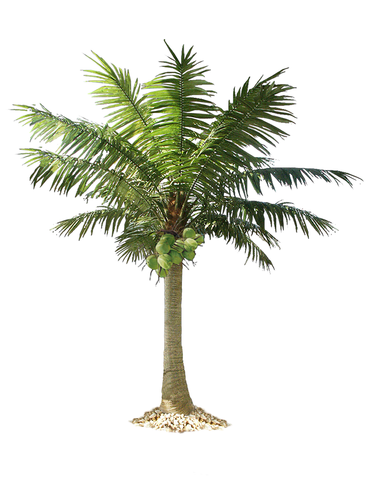 Palm Tree Top View Png Tropical Tree Png