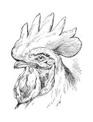 clip bird rooster antique illustration