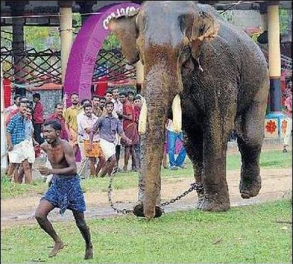 'Great Escape' - mahout's miracle escape - 06 Pics+Video ...