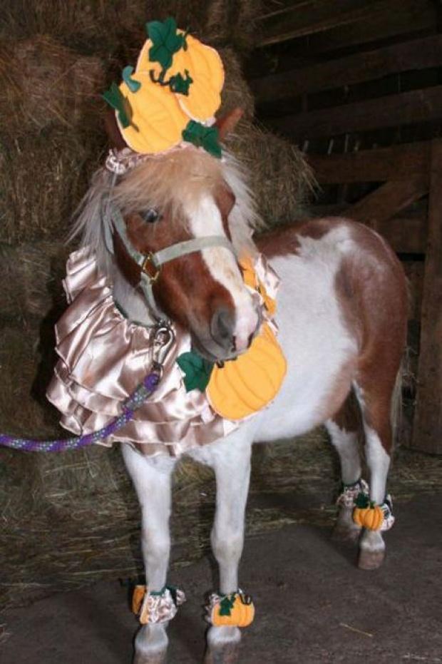 Horse Fancy Dress Ideas: Knight |Horse Fancy Dress Costumes