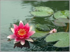 Texte important du Zen Lotus-300x224
