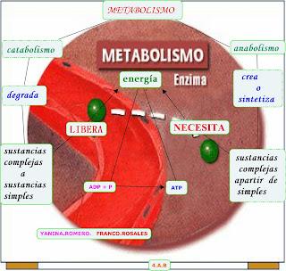 metabolismo celular: Metabolismo celular