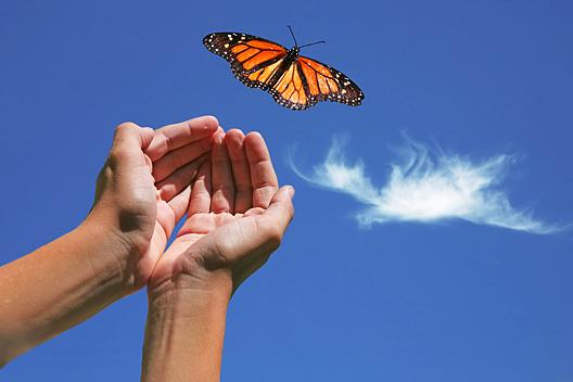 Butterfly flying away - photo#47