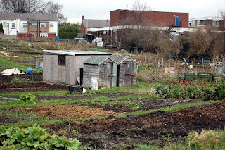 View of the allotments