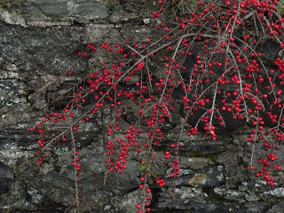 berries in ireland copyright kerry dexter