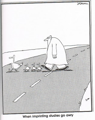 Image result for far side