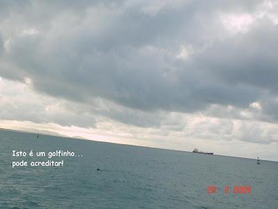Golfinhos avistados durante passeio de escuna em Fortaleza - CE