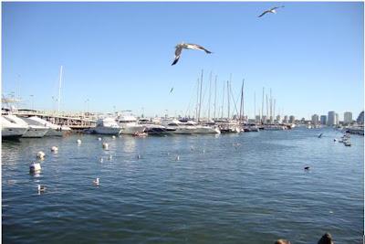 Porto com iates ancorados em Punta del Este - Uruguai