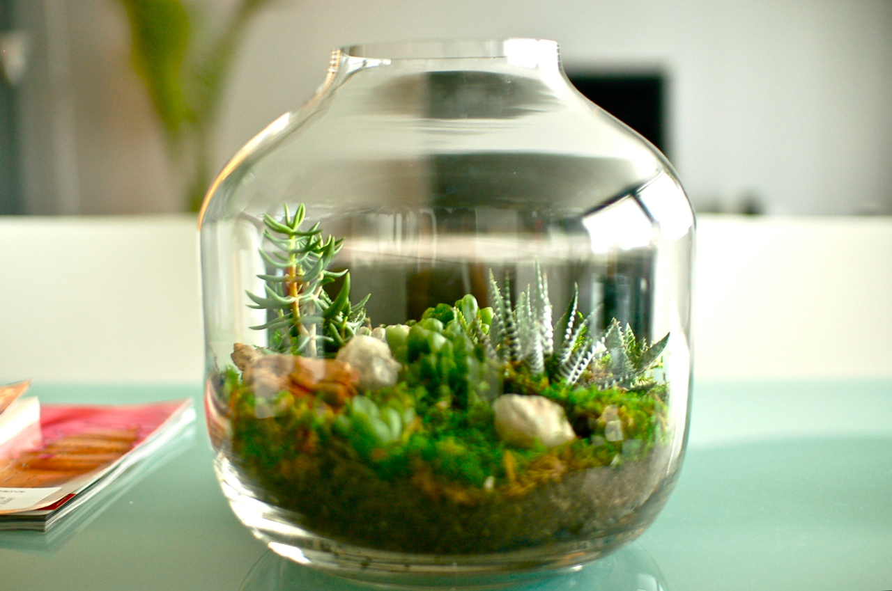 80 Best Images About Room In A Box On Pinterest: Terrarium Fever, Baby!