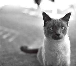 cross eyed cat