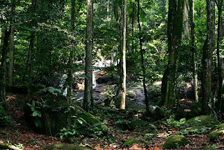 Malaysia forest