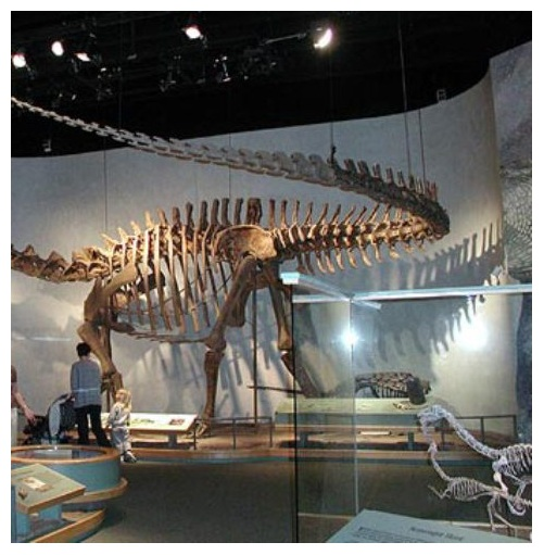 Denver Museum Of Nature Science: Denver Museum Of Nature And Science In Colorado