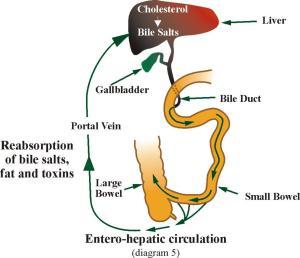Diet Penyakit Kandung Empedu