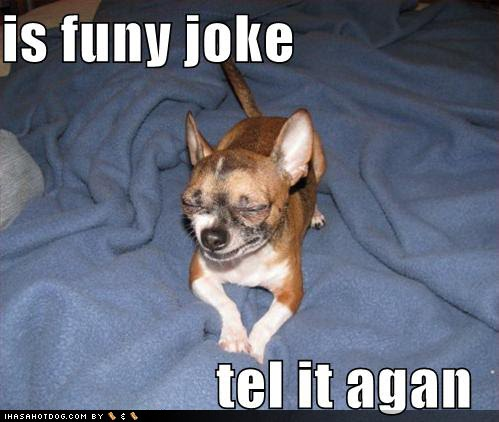 chihuahua puns run like ya stole sumthin 5 jokes friday and some shout outs 3717