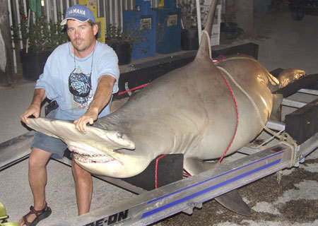 60 Massive Megalodon Facts About the Biggest Shark Ever ... |Worlds Largest Bull Shark