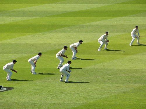 cricket - photo #43