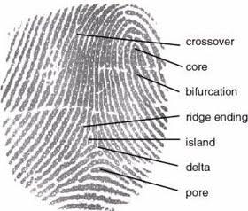 House of Entertainment: Fingerprint Facts